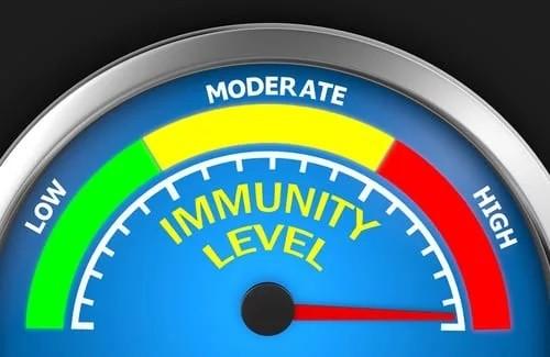 Como o whey melhora o sistema imune?